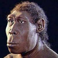 pitecanthropus