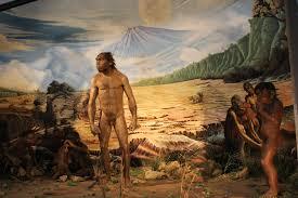 Sejarah Penemuan Manusia Purba Di Indonesia