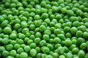 budidaya kacang hijau